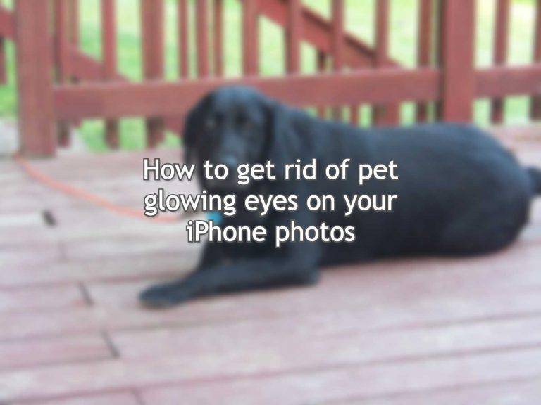 Как избавиться от светящихся глаз домашних животных на фотографиях iPhone